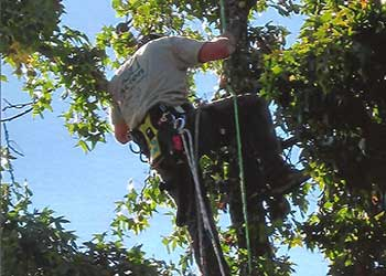 Services Paul The Tree Climber